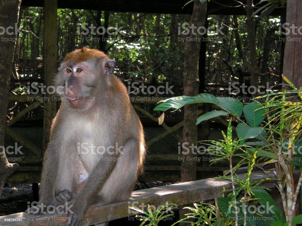 macro photo of a monkey on nature background stock photo