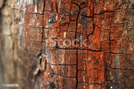 465559373 istock photo macro photo of cracked red tree bark 1149306758