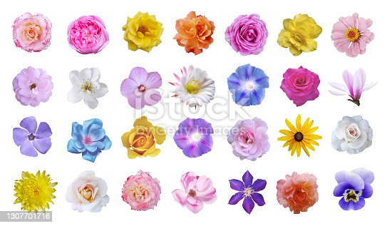 Macro photo of flowers set: rose, cactus flower, ipomoea, magnolia, pansy, hibiscus on white background.