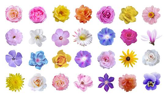 Macro photo of flowers set: rose, cactus flower, ipomoea, magnolia, pansy, hibiscus on white background.
