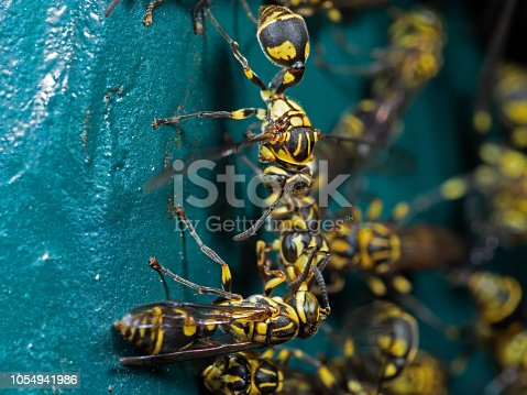 1125541278istockphoto Macro Photo of Group of Wasps on Blue Green Metal Material 1054941986