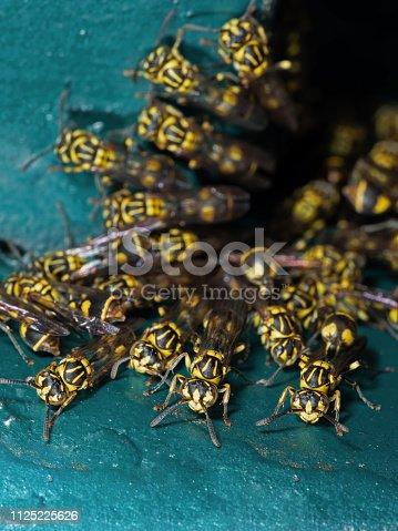 1125541278istockphoto Macro Photo of Group of Wasps on Turquoise Floor 1125225626