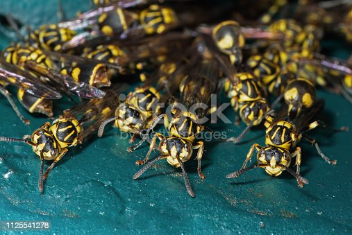 istock Macro Photo of Group of Wasps on Turquoise Floor 1125541278
