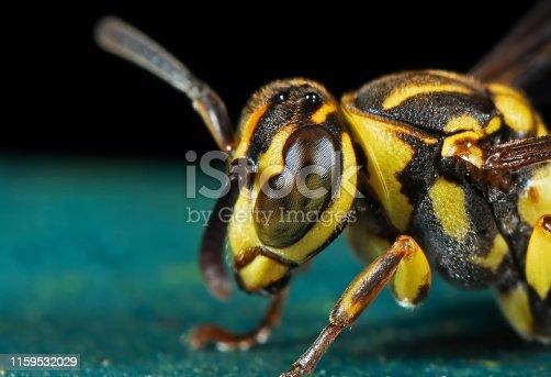 1125541278istockphoto Macro Photo of Head of Wasp on Turquoise Floor 1159532029