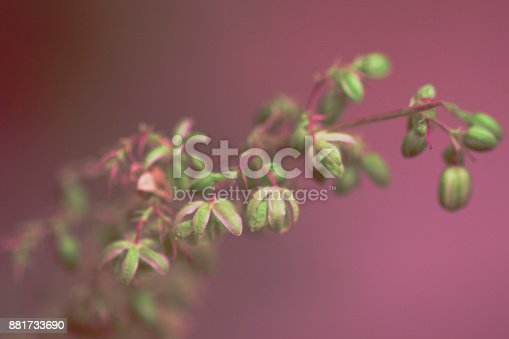 936410150istockphoto Macro photo of hemp plant flower . View from above. Color toned image. Selective focus. 881733690