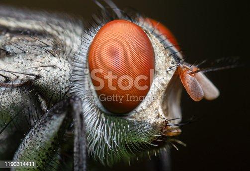 Macro Photography of Housefly Isolated on Background
