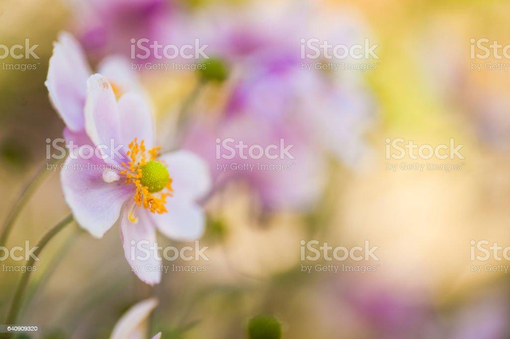 Macro photo of purple pink summer flowers stock photo