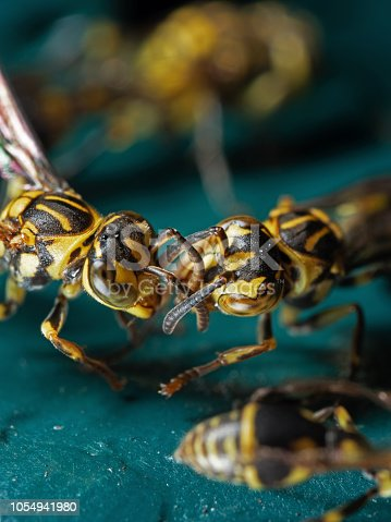 1125541278istockphoto Macro Photo of Two Wasps on Blue Green Metal Material 1054941980