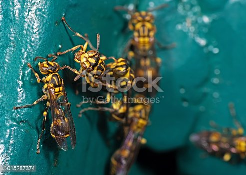 1125541278istockphoto Macro Photo of Wasp on Blue Green Metal Material 1015287374