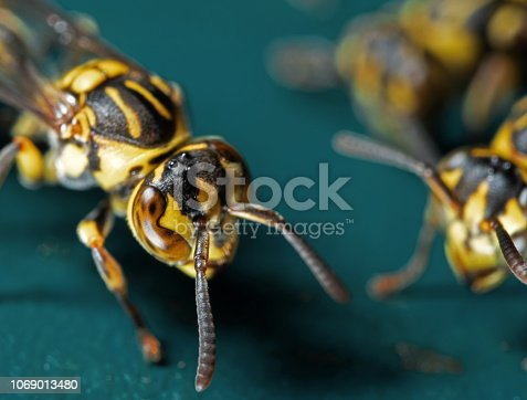 1125541278 istock photo Macro Photo of Wasp on Blue Green Metal Material 1069013480