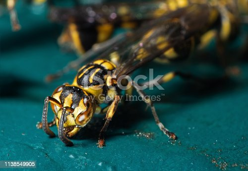 1125541278 istock photo Macro Photo of Wasp on Blue Green Metal Material 1138549905