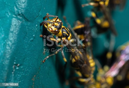 1125541278istockphoto Macro Photo of Wasp on Blue Green Metal Material 1138763083