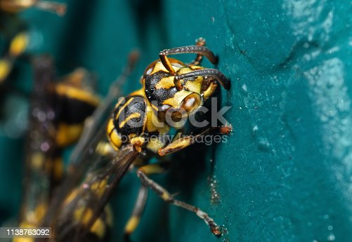 1125541278istockphoto Macro Photo of Wasp on Blue Green Metal Material 1138763092