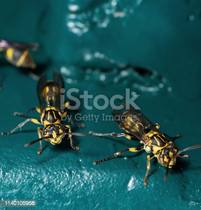 1125541278istockphoto Macro Photo of Wasp on Blue Green Metal Material 1140105958