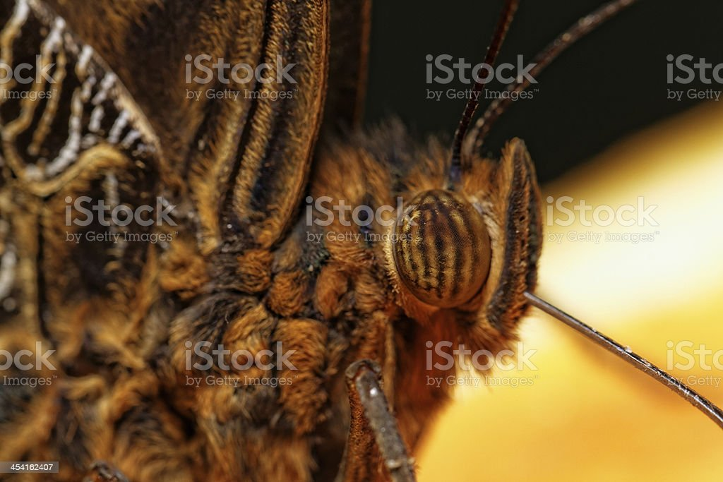 Macro photograph of a butterfly stock photo