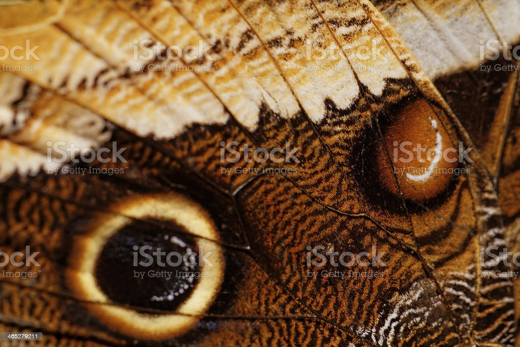 Macro photograph of a butterfly wing stock photo