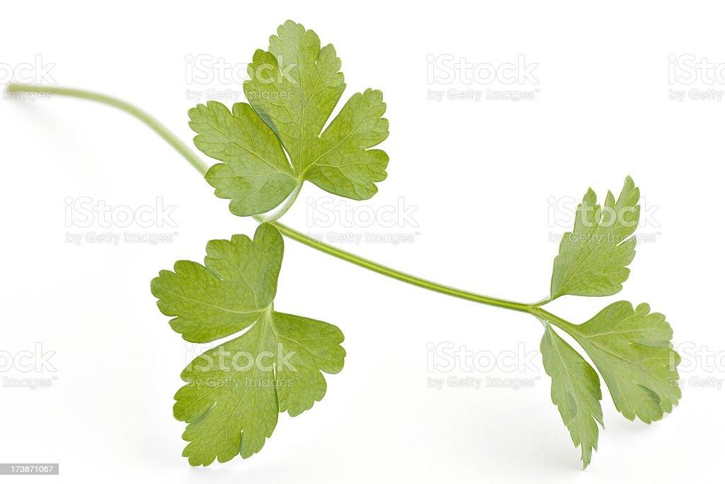 macro photograph of fresh parsley leaves royalty-free stock photo