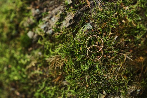 makro fotografieren von trau- und verlobungsringe, sitting on top of moss - eheringe öko stock-fotos und bilder