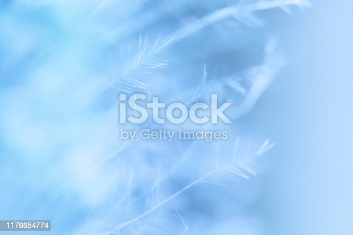 istock Macro photography feather abstract background art image. Blue and aqua tones with delicate details and softness. 1176654774