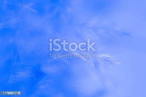 istock Macro photography feather abstract background art image. Blue tones with delicate details and softness. 1176661718