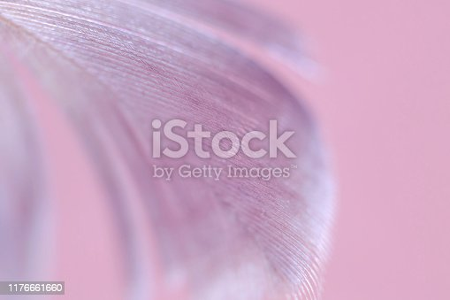 istock Macro photography feather abstract background art image. Pink  tones with delicate details and softness. 1176661660
