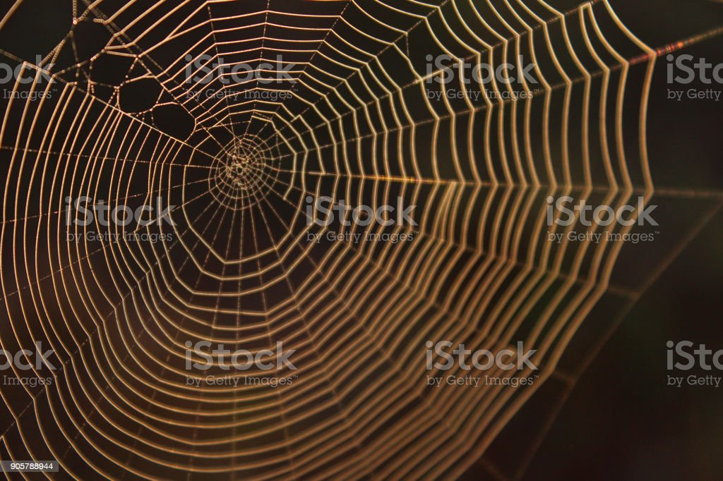 Macro Photography of a Spider Web Background Texture with Blurred Colors stock photo