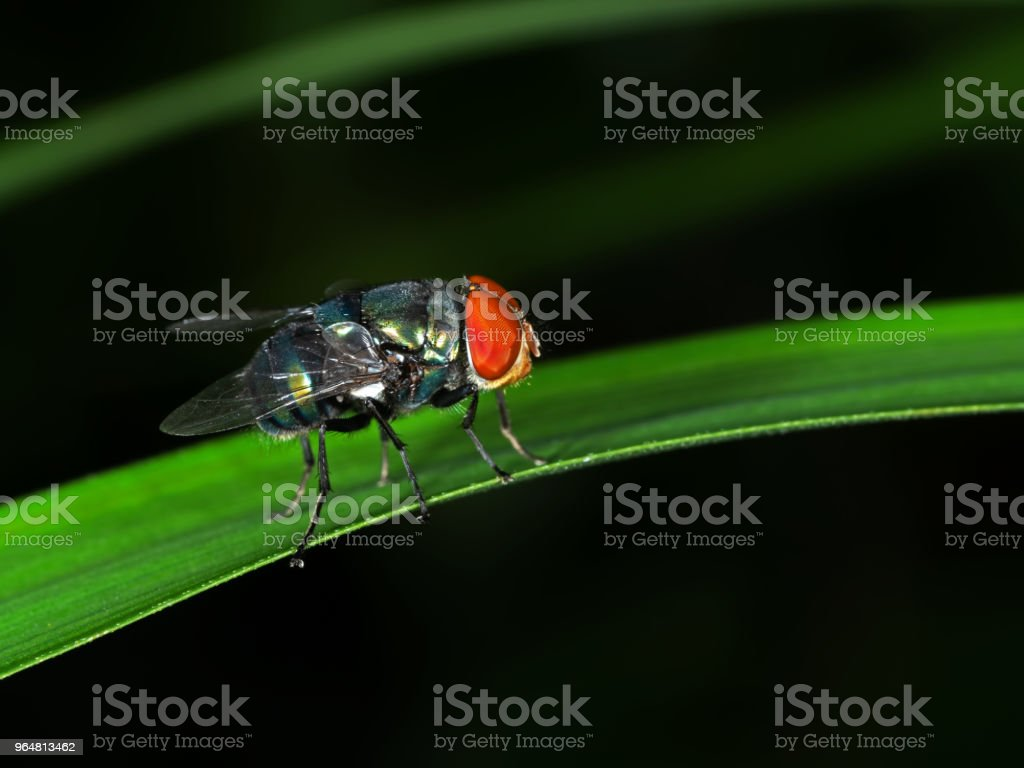 Macro Photography of Blow Fly on Green Leaf royalty-free stock photo
