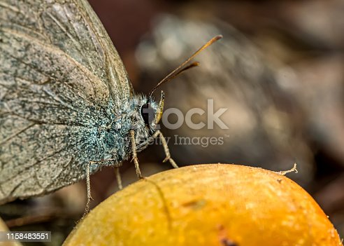 macro photography of butterfly on a fruit