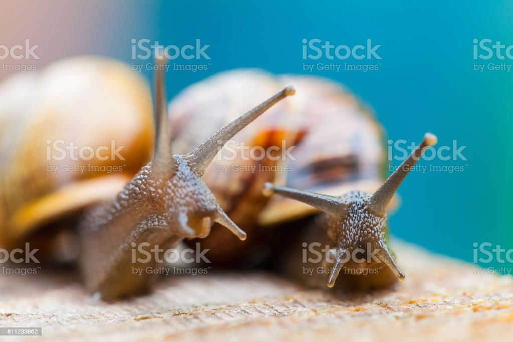 Macro photography of snails. Close-up. Blur effect. stock photo