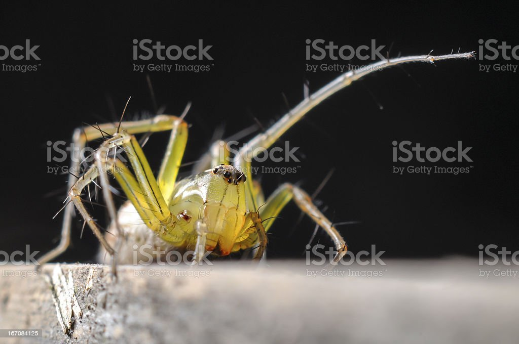macro photography of spider on wood royalty-free stock photo