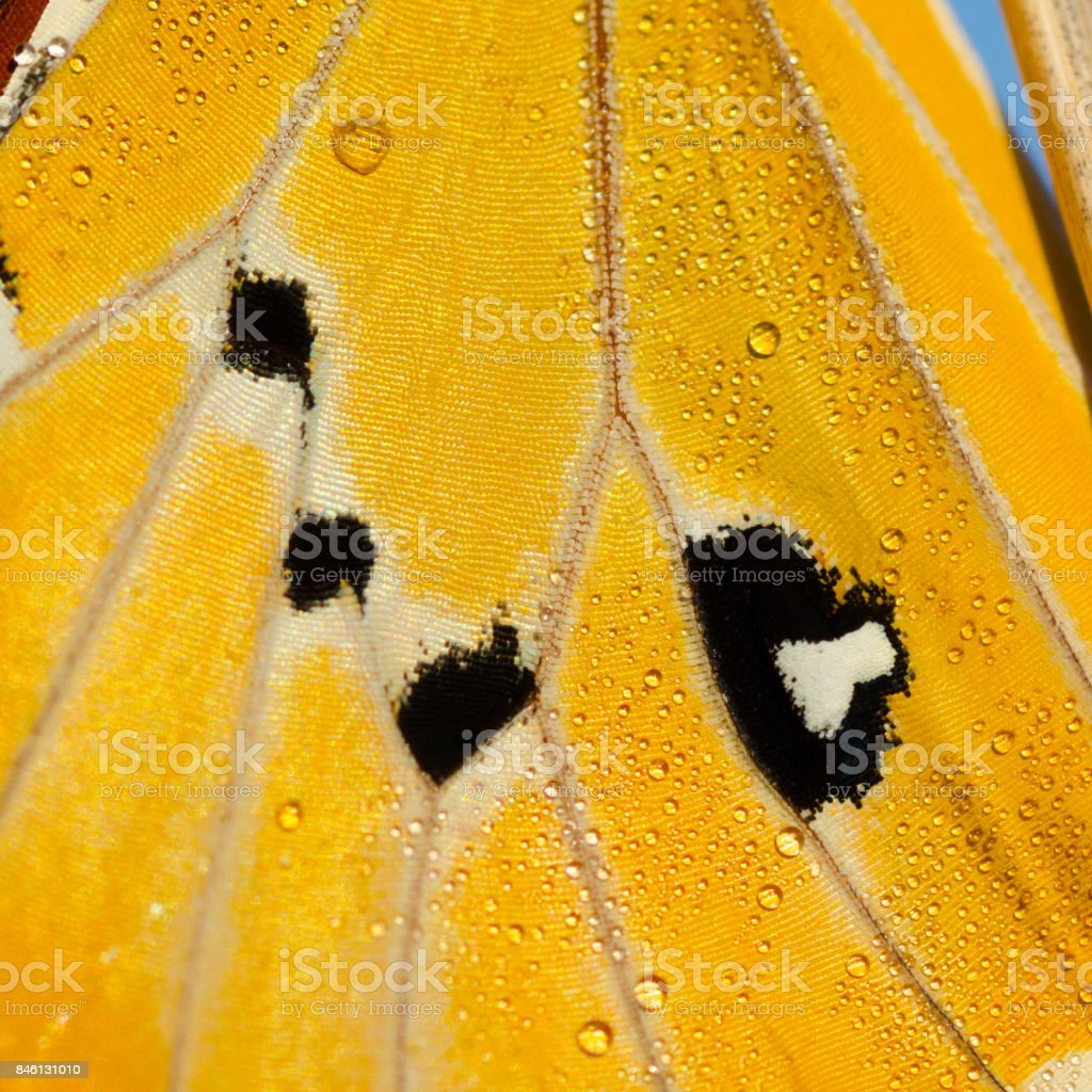Macro photography of the wing of a yellow butterfly stock photo