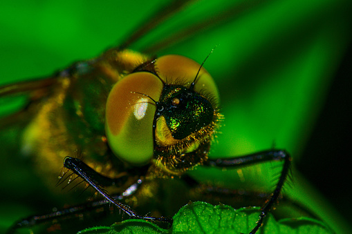The picture shows the compound eyes of a dragonfly as a macro picture. The dragonfly is mainly colored green, while the eyes still have a certain amount of red.