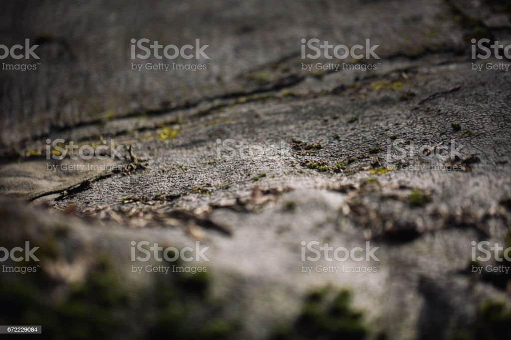 Macro picture of green moss. Close up macro photography of nature. Color bright background with amazing bokeh. moss lichen background on the grungy cement wall texture. stock photo