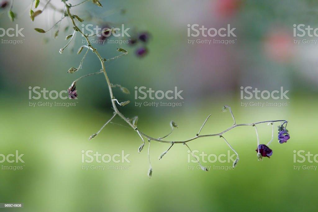 Macro plant royalty-free stock photo