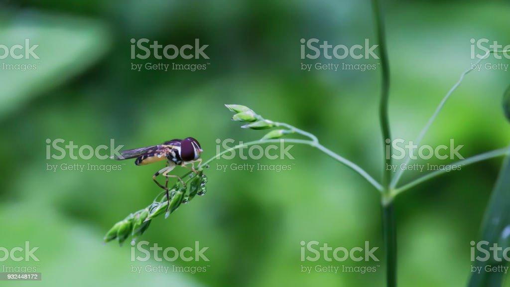Macro portrait of wild insect stock photo
