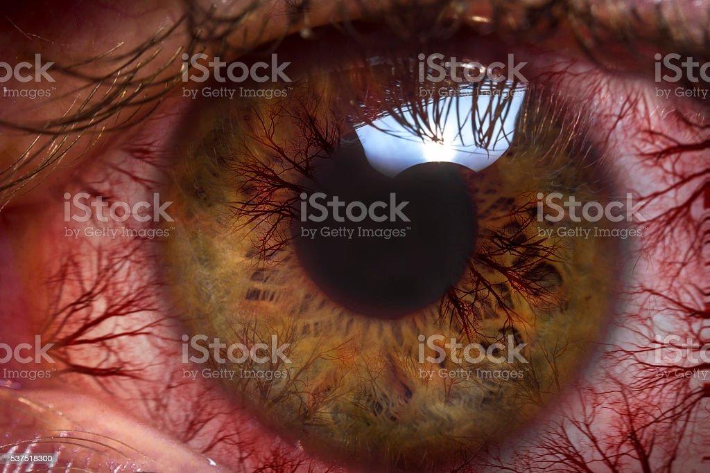 Macro Red Eyeball stock photo