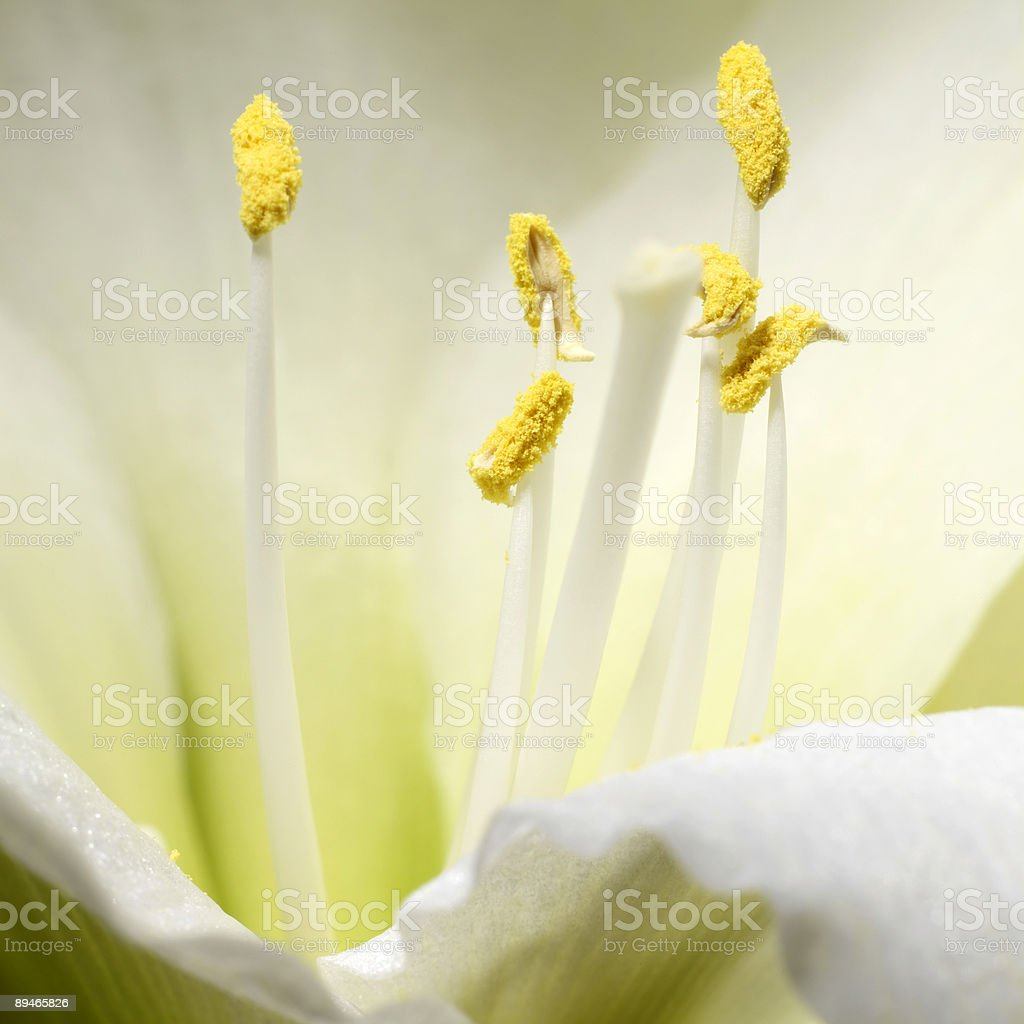 macro shot of a delicate, white flower 免版稅 stock photo