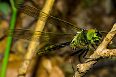 The picture shows a colorful dragonfly sitting on a branch. The animal was taken at the ice pond in the city of Pirmasens, Germany. The pond is a popular travel destination.