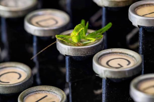 makroaufnahme eines grashüpfers (acrididae), der auf der tastatur einer historischen schreibmaschine sitzt. - die wilden 20er stock-fotos und bilder