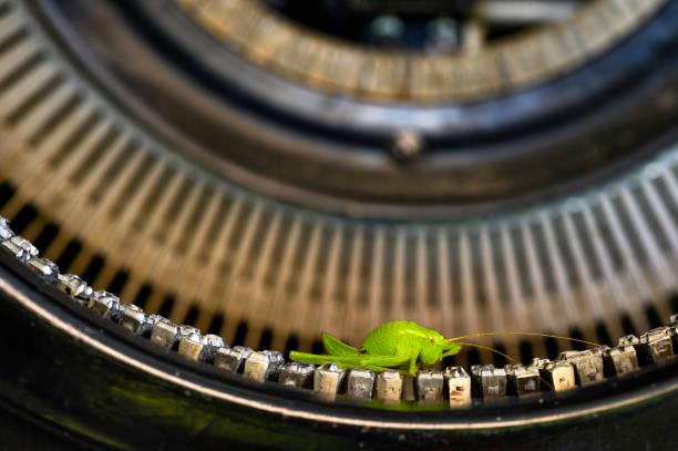 makroaufnahme eines grashüpfers (acrididae), der auf den schriftleisten einer historischen schreibmaschine sitzt. - die wilden 20er stock-fotos und bilder