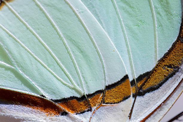 Macro shot of a nawab butterfly wing picture id479311722?b=1&k=6&m=479311722&s=612x612&w=0&h=6xnhldsqyv4wjudeguhlvdakyaqnghoqkbsebfdpr8w=