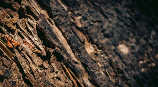 Macro shot of a rotting tree stump stock photo
