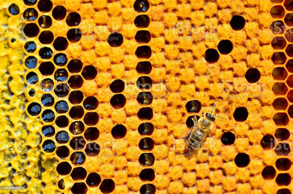 Macro shot of bees swarming on a honeycomb stock photo