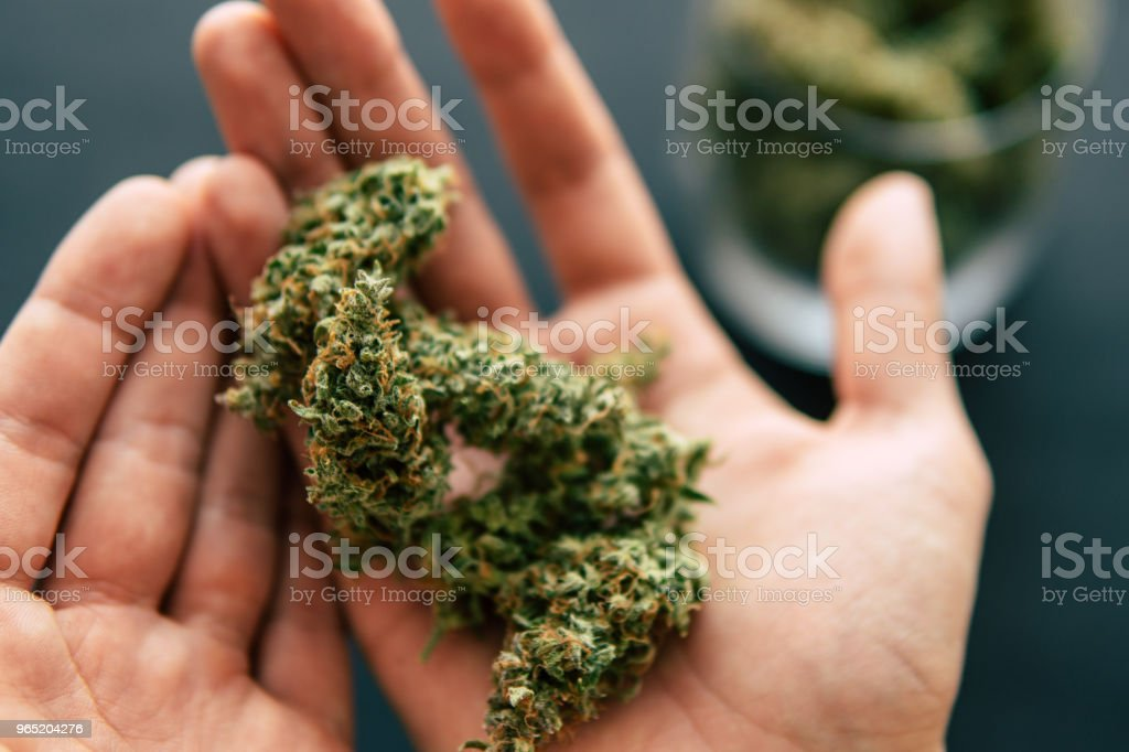 Macro shot of cannabis flowers with trichomes in hand man with a dark background top view zbiór zdjęć royalty-free
