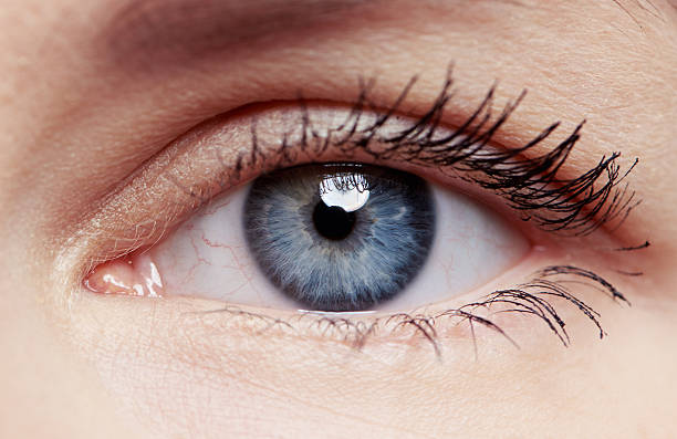 Macro shot of female eye – Foto