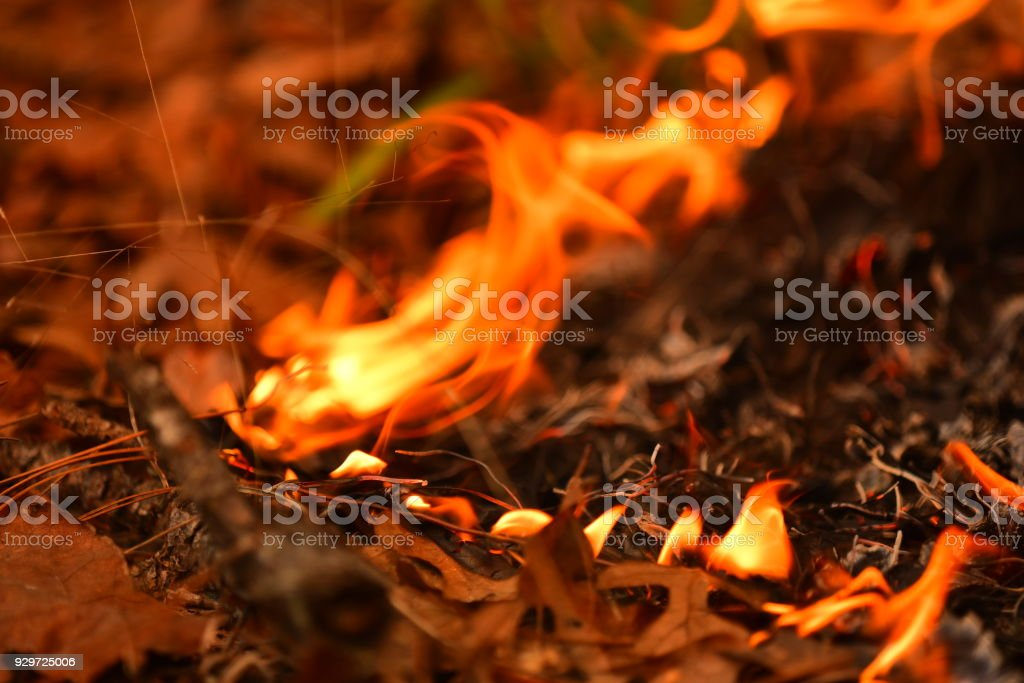 Macro shot of flames slowly progressing through leaf litter during prescribed fire stock photo