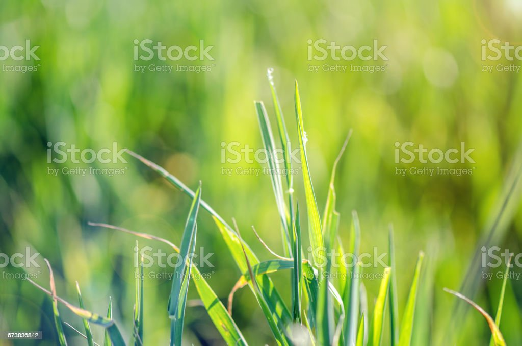Macro Shot Of Grass royalty-free stock photo
