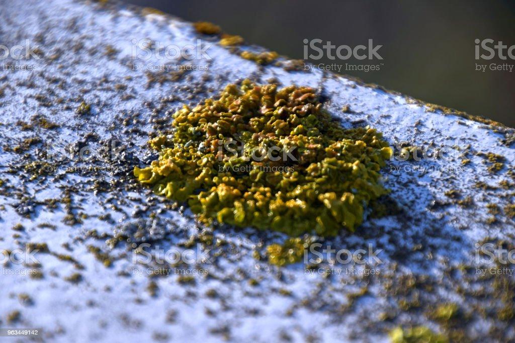 macro shot of green lichens lit by the sun - Zbiór zdjęć royalty-free (Abstrakcja)