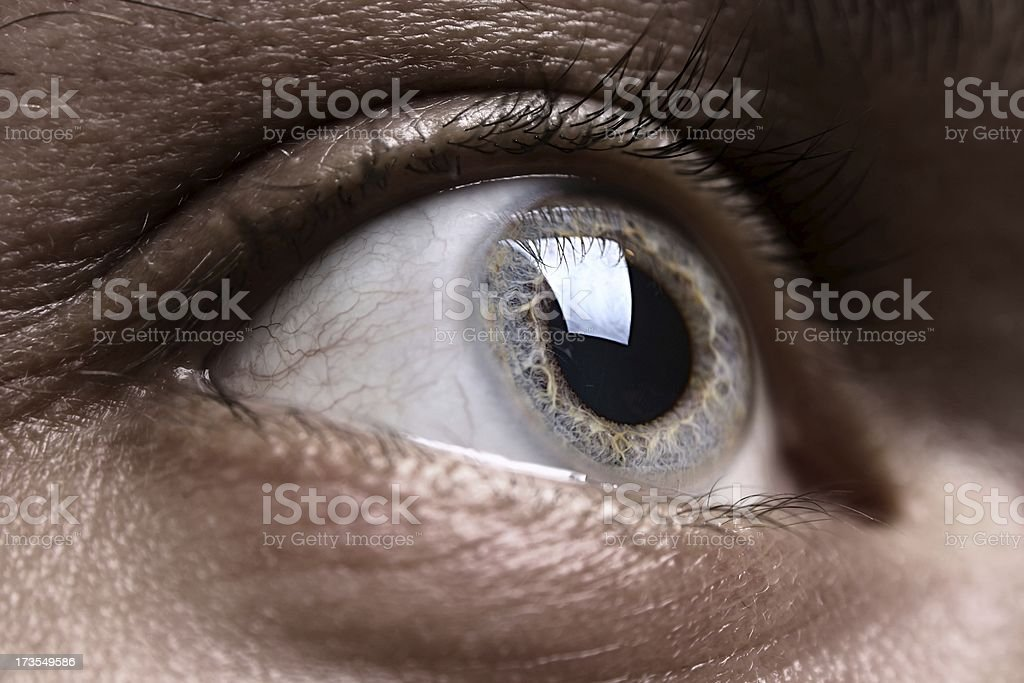 Macro shot of grey man's eye royalty-free stock photo
