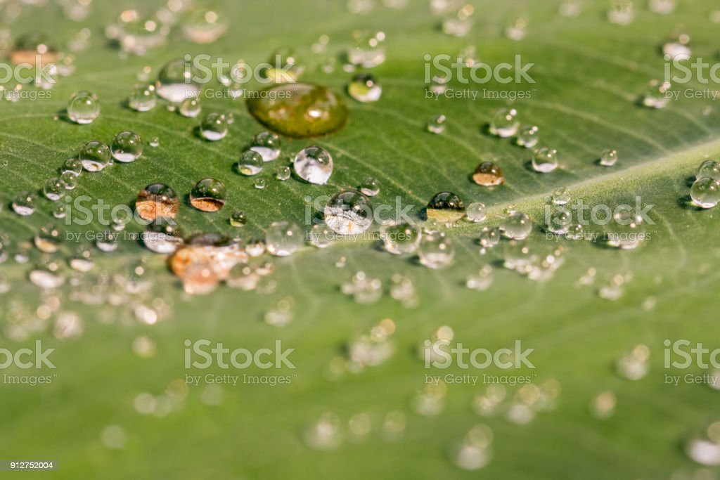 Macro shot of many bright and clear water droplets on a green leaf. royalty-free stock photo